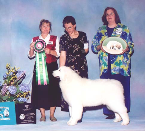 AddOn winning Best in Futurity at the 2003 National Specialty in Richfield, Ohio