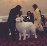 Cupid at the 2003 GPCA National Specialty