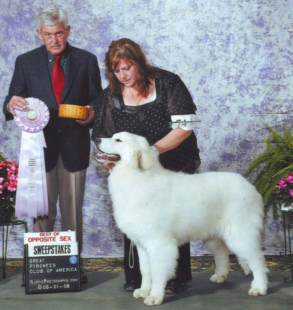 Indigo takes Best of Opposite Sex at the 2008 GPCA National Specialty in Ohio under breeder judge Mr. Michael Floyd